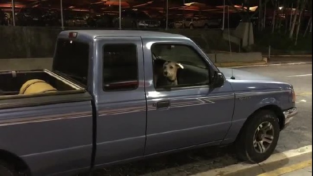 Dog leaps out of truck window and frantically charges at dad he hasn't seen in 10 days