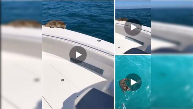 Man Throws Raccoon Off His Boat