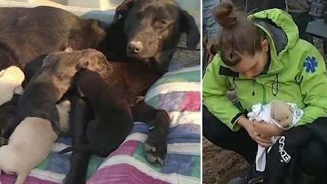 Dog buries puppies to save them from raging forest fire
