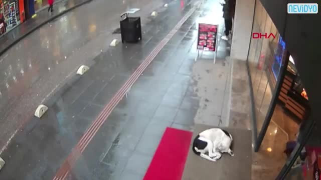 Camera Catches Woman's Sweet Gesture For A Cold Stray Dog