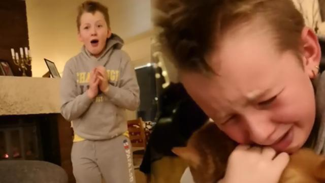 Little boy left sobbing moment he's reunited with missing cat