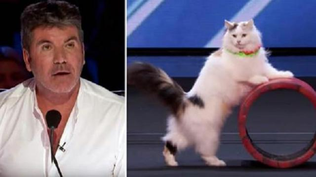 Cats perform hilarious yet incredible circus routine, leaving
