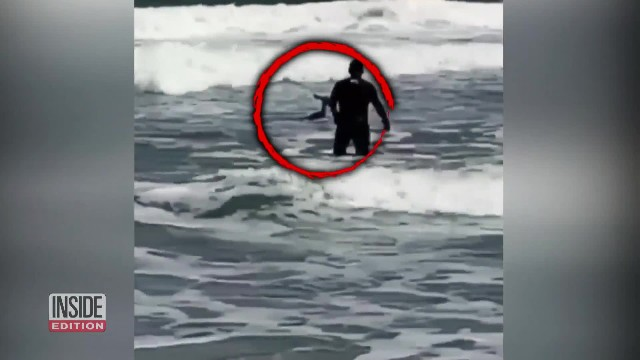 Surfers spot deer struggling to swim in frigid 50-degree ocean, so they band together to save it