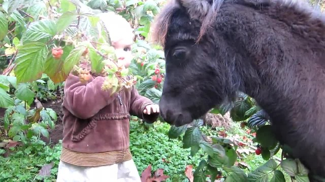 1 yr old approaches that mini horse. But how the horse reacted next had me in stitches!