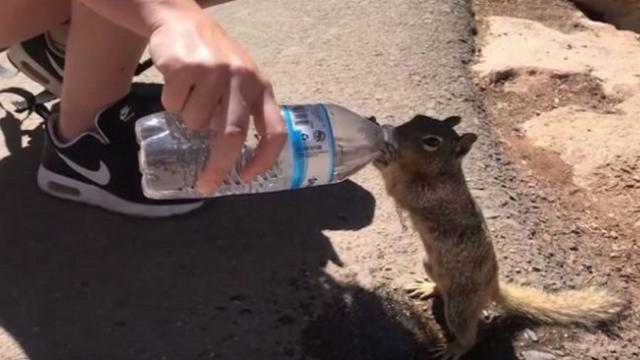 Tourist couple noticed tiny squirrel following them around When