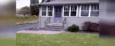 Every Time The Mailman Delivers The Mail This Angry Cat Throws The Most Hysterical Fit