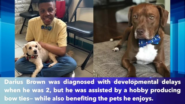 12-year-old boy creates bow ties for shelter animals