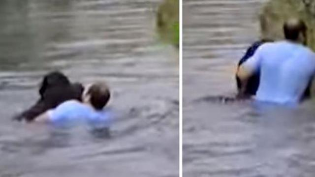 Zoo staff refuse to save drowning chimp, so man jumps into enclosure