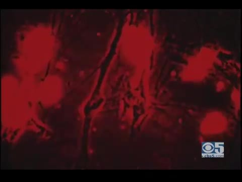 KPIX Reports - The Maze: Etched In Acid ( Documentary Film - 1967)