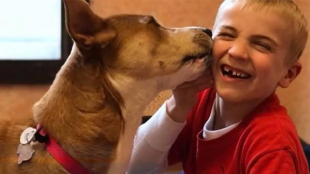 Boy helps save hundreds of dogs from kill shelters