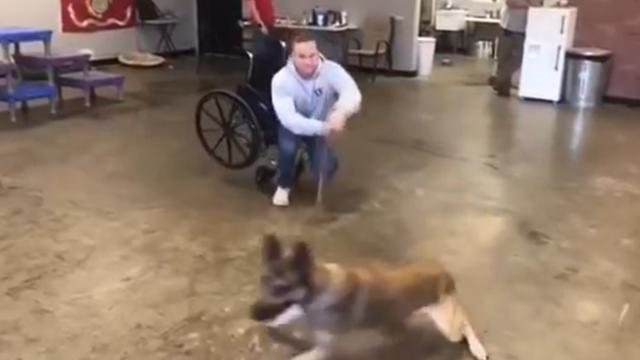 Watch- Pup fails service dog test in hilarious fashion, but wins over the viewers' hearts