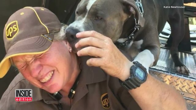 After doggie's human pass away, pit bull sobs like a baby and begs UPS driver to give him a home