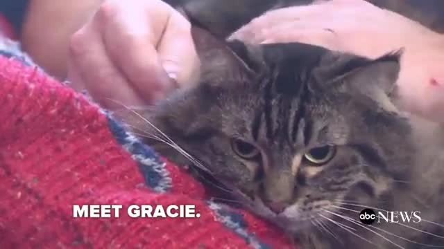 Hero cat pounds on door, saves owners from carbon monoxide poisoning