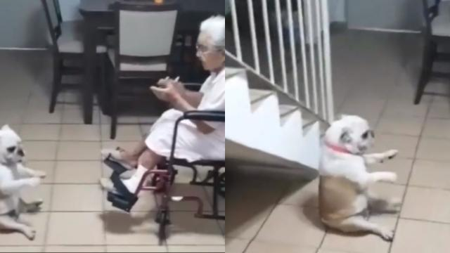 This dog can't resist dancing to grandma's singing, and it is too cute