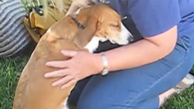 Beagle gets incredibly emotional when her family comes home