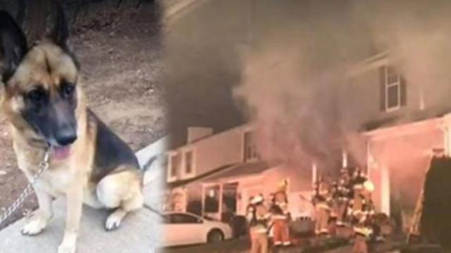 Hero German shepherd wakes owners during fire, saves everyone inside