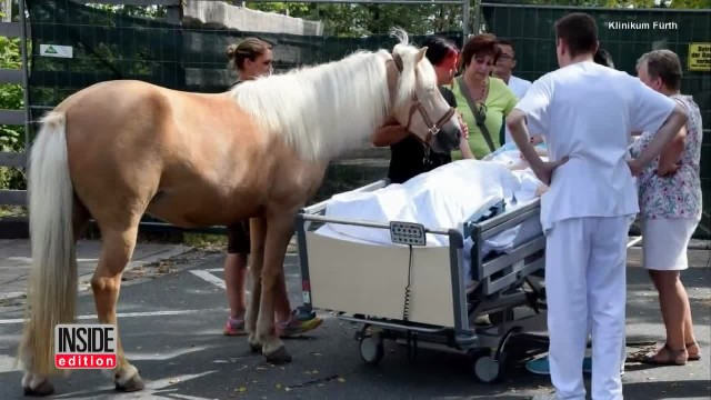 Horse comforts dying owner in her hospital bed, fulfilling her last wish