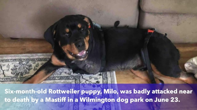 Dog loses leg after attack in Wilmington park