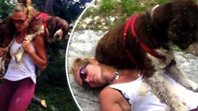 Woman heroically walks six miles down rough hill carrying an injured lost hound on her shoulders