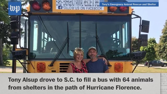 Trucker uses school bus to evacuate 64 pets from Florence's path