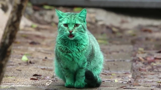 Feline a little green! Meet the GREEN cat of Bulgaria