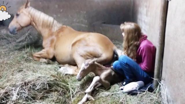 After pregnant horse gives birth to foal owner notices her strange afterbirth and goes running