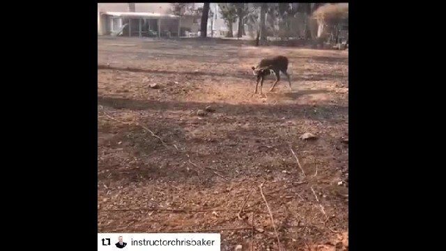 Firefighters rescue struggling deer caught in power line during raging wildfires