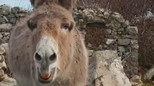 Please listen to this donkey belt out like like an opera