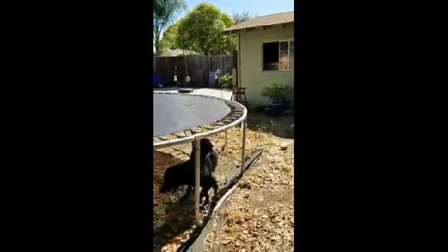 Mom Catches Dog's Hilarious Game Of Fetch In Adorable Home Movie