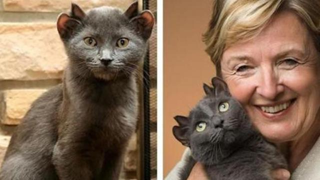 Cat with 4 ears finds forever home after being rejected by everyone