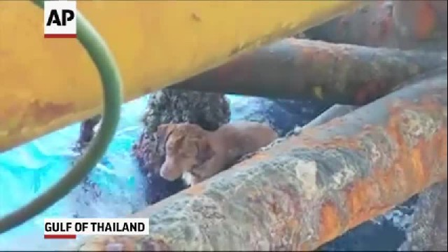 Dog Found Alive And Swimming 135 Miles From Shore, Rescuers Have No Idea How He Got There
