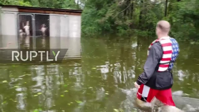 USA  Watch dramatic rescue of trapped dogs in Florence-hit North Carolina