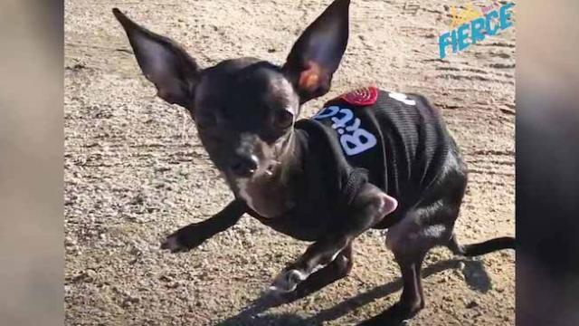 Dog rescuer cries on seeing tiny deformed pup adopted from rescue