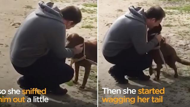 Dog spends two years alone at shelter – watch the tearful moment she recognizes a familiar scent