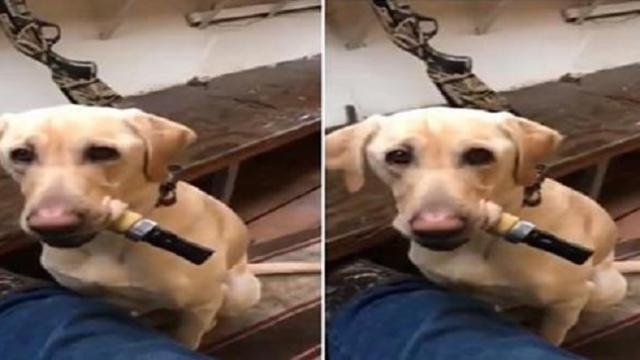 Smart dog learns how to use duck call like a pro