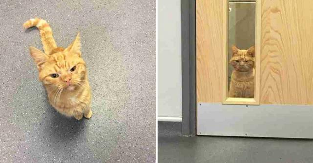 Cat with the grumpiest face makes everyone at shelter fall in love with him