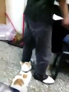 """ Man is yelling and threatening someone, but when the cat hears it...'Please stop, please stop now!"