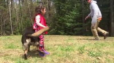 Man circles dog and 5-year-old girl, then she gives the signal and dog springs into action