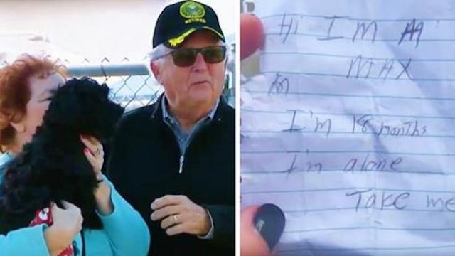 Woman hears abandoned dog barking on street, runs over to help and finds heartbreaking note tucked i