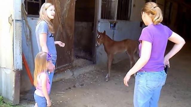 Momma horse hears scared foal cry out as baffled family watches her bolt into action