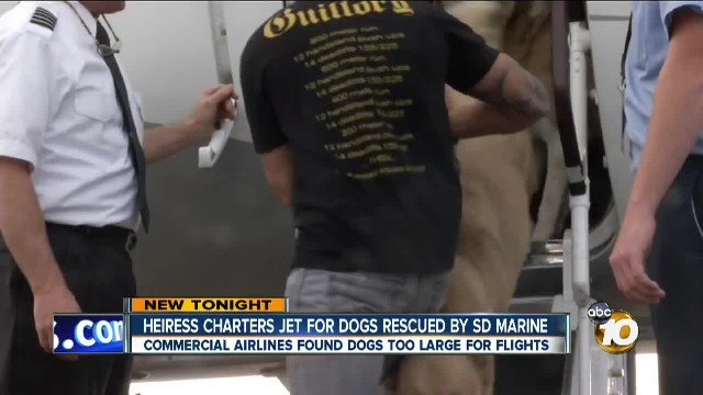 Heiress to Wrigley Gum charters private jet for Camp Pendleton Marine's family and dogs he rescued