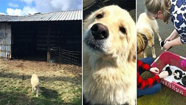 Depressed mama dog who lost her puppies to barn fire meets a
