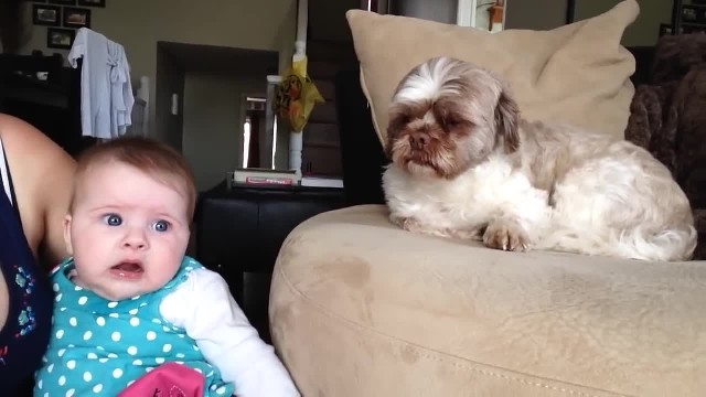 Baby and dog bicker back and forth in hilarious interaction