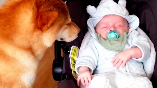 Mommy brings newborn home with captured footage of family dog that goes viral
