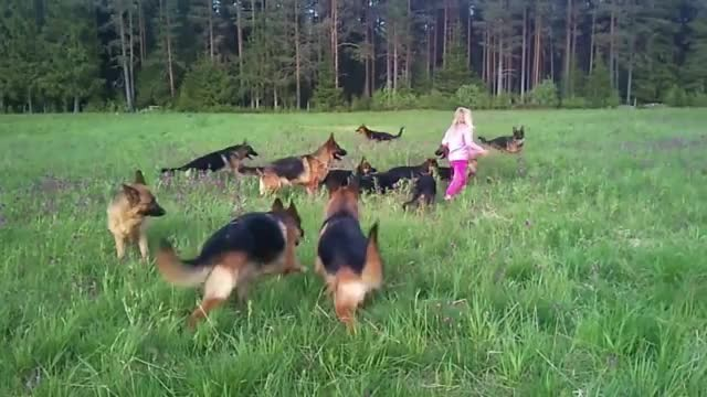 Little Girl Plays With 14 German Shepherds – This Is What Heaven Must Be Lik