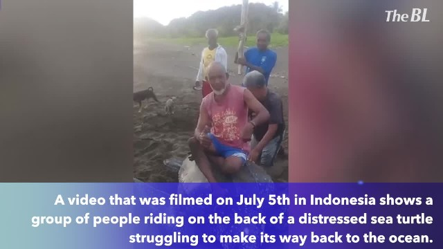Locals torture sea turtle by riding on its back after it laid eggs on beach!