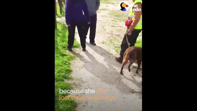 Dog Reunited with Owner Slowly Recognizes Dad After Years in Shelter - The Dodo