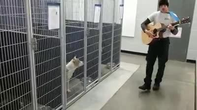 Shelter dogs stop barking and become mesmerized when man brings out his acoustic guitar