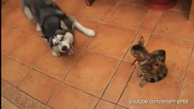 These dogs clearly didn't get the memo that cats are not the friendliest species