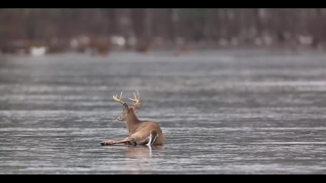 Hunter Becomes Hero For 8-Point Buck Stranded On Ice For 3 Hours, 2 Days Before Hunting Season